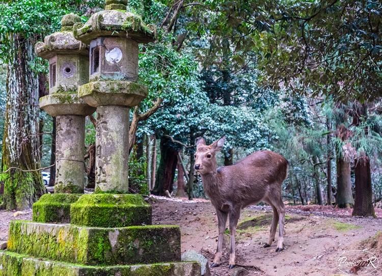 One day in Nara